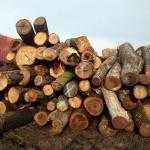 Cull Logs
